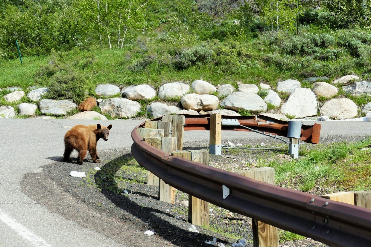 Bear sightings on the rise.