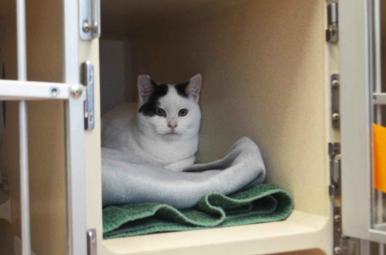 Routt County Humane Society offering free adoptions of feral cats