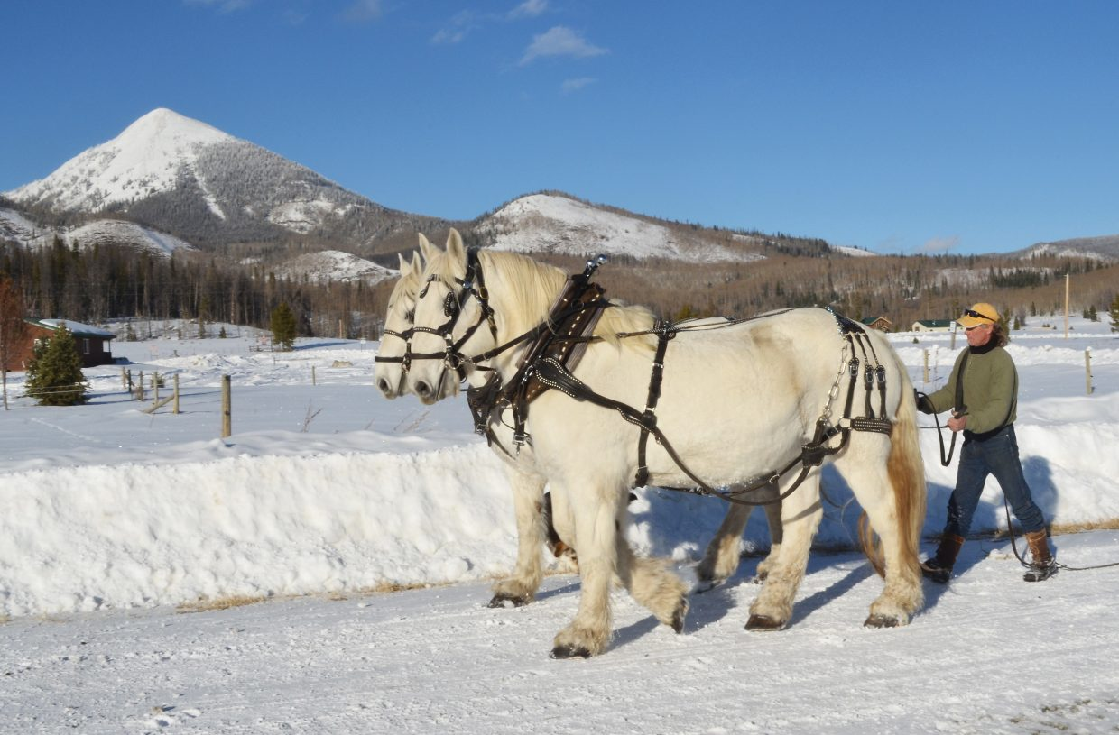 d137c51a Head wrangler Rick Welfel works Thursday with a team of Percherons that  will pull sleighs at Hahn's Peak Roadhouse in North Routt this winter.