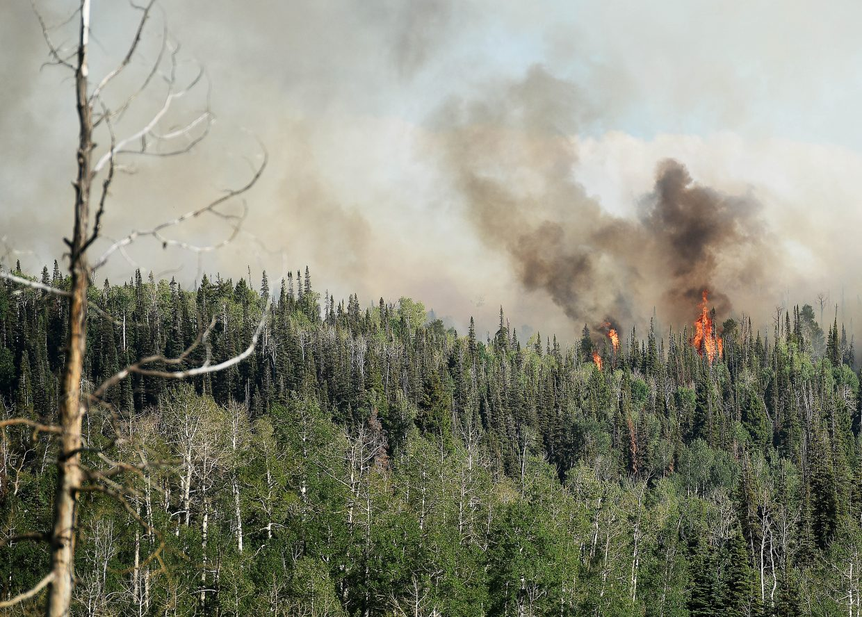 The Mill Creek fire burns through forest Saturday in North Routt County.