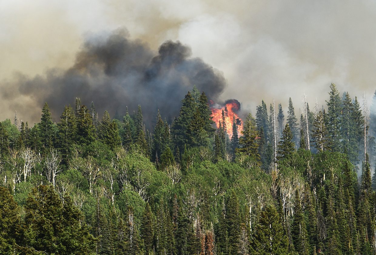 A fire burns through forest in North Routt County on Saturday.