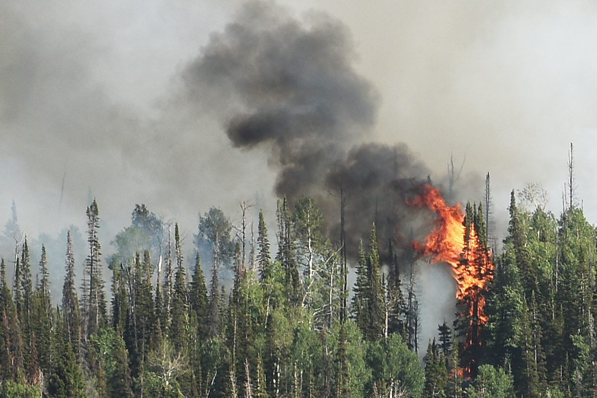 A tree goes up in flames on Saturday at the Mill Creek fire in North Routt.