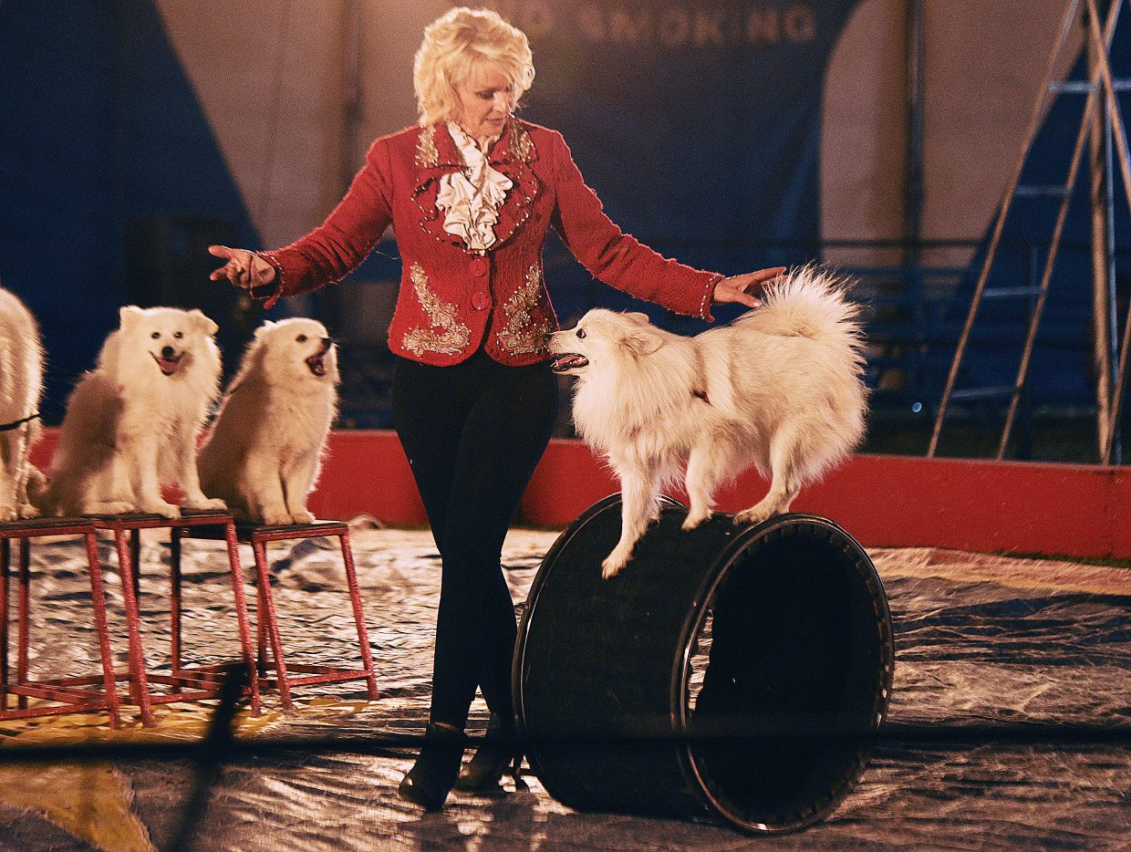 Natalie Cainan works with her dogs as part of the American Eskimo Eskapade during a performance at the Culpepper & Merriweather Circus Tuesday at the Brent Romick Rodeo Arena in Steamboat Springs.