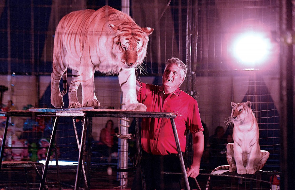 Trey Key works with a tiger during a performance at the Culpepper & Merriweather Circus Tuesday afternoon at the Brent Romick Rodeo Arena. The circus stopped in Steamboat Springs for performances Monday and Tuesday.