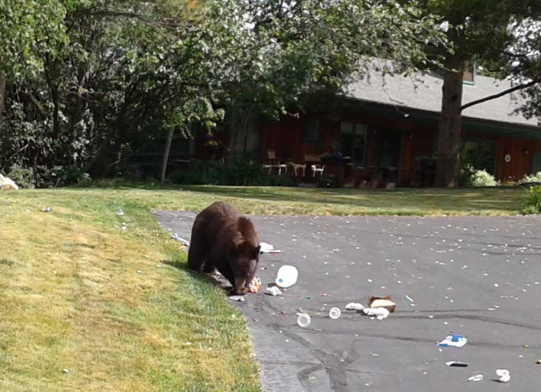A young black bear spread a little trash around a neighbor's driveway on Blue Sage Circle.