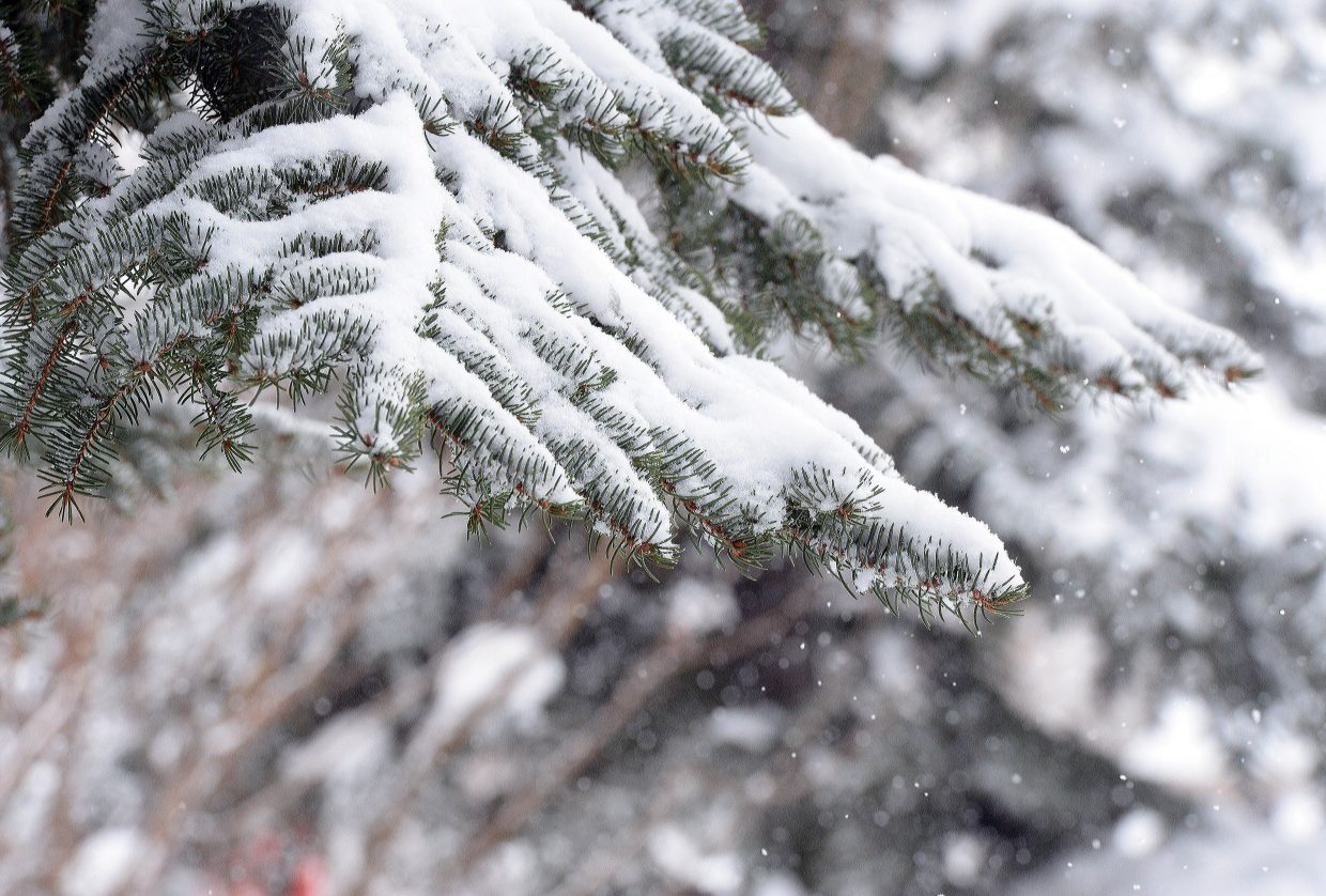 Snowflakes filled the air and provided a layer of fresh snow that covered the branches of trees in the Steamboat Area Thursday morning as another winter storm made its way through the Yampa Valley. The snowy conditions are expected to stick around for the next few days.