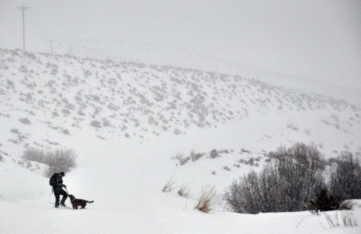 Liza Rossi, a terrestrial biologist for Colorado Parks and Wildlife, sets out on her skiing route with dog, Elwood, by her side.