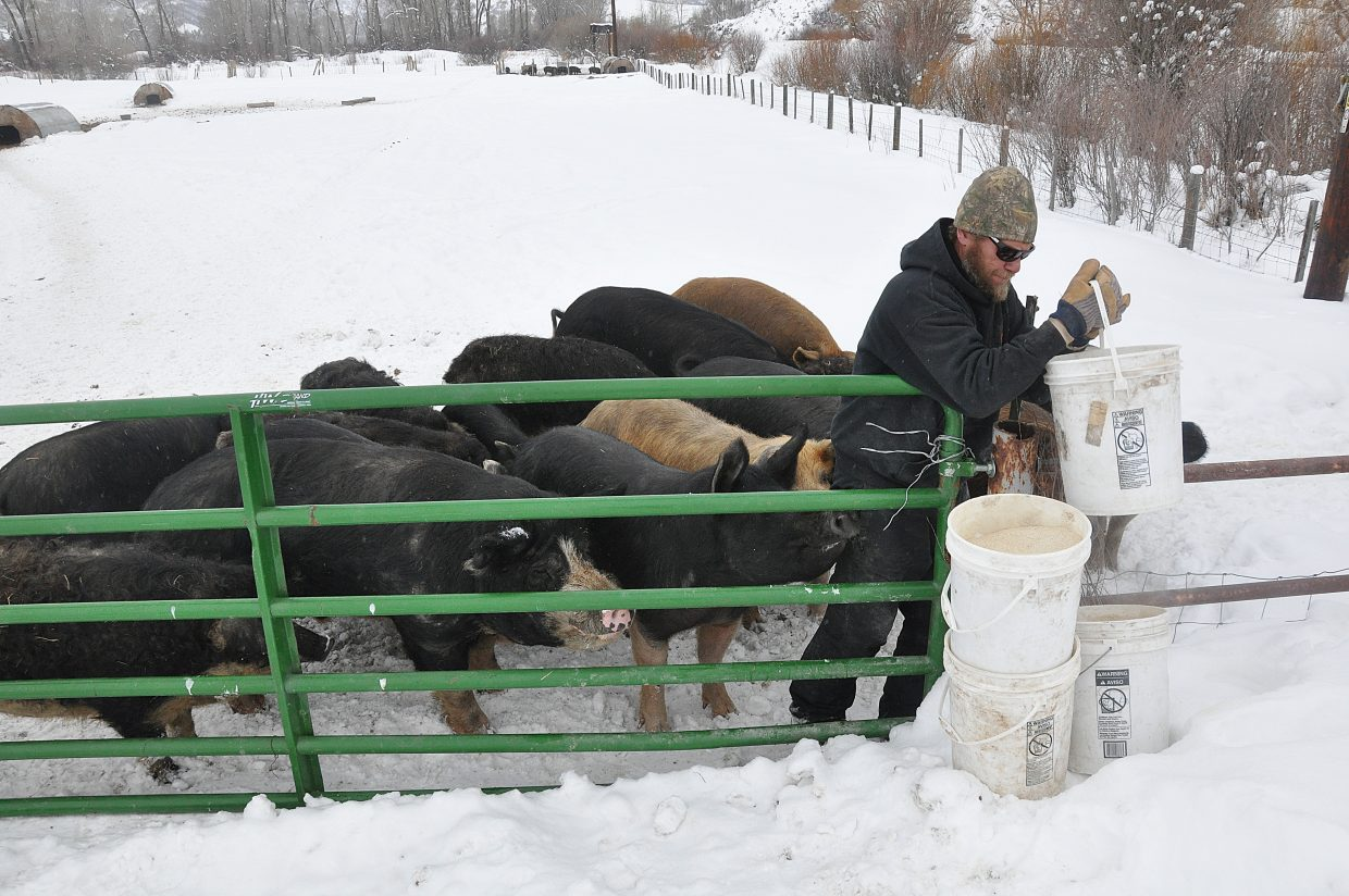 A drove of pigs waits to be fed by Happy Zacharda, of Yampa Valley Farms, on a farm in Milner. The pigs eat spent grain from Butcherknife Brewing Co.