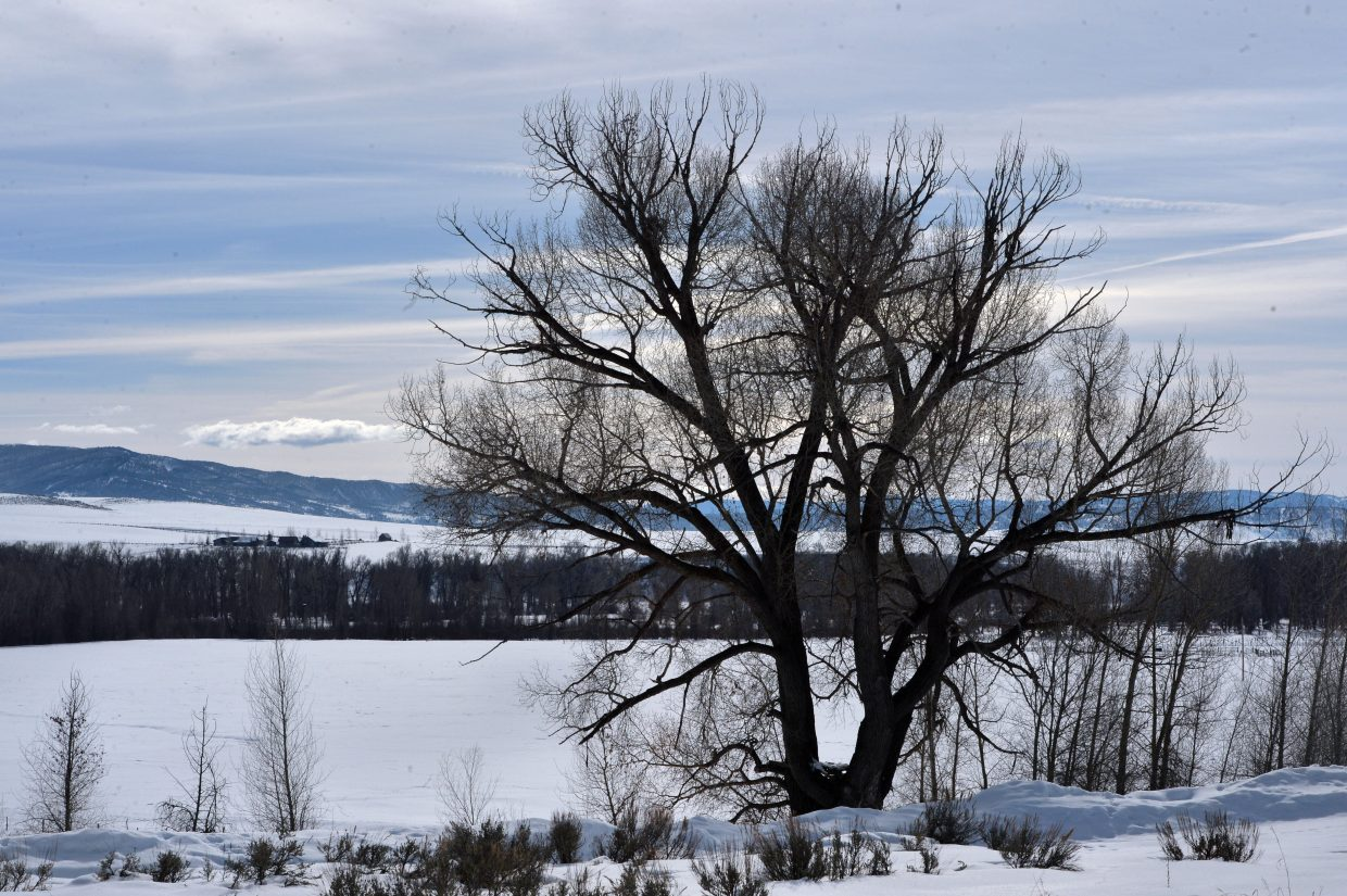 A tree stands silhouetted against a winter sky Thursday west of Steamboat Springs.
