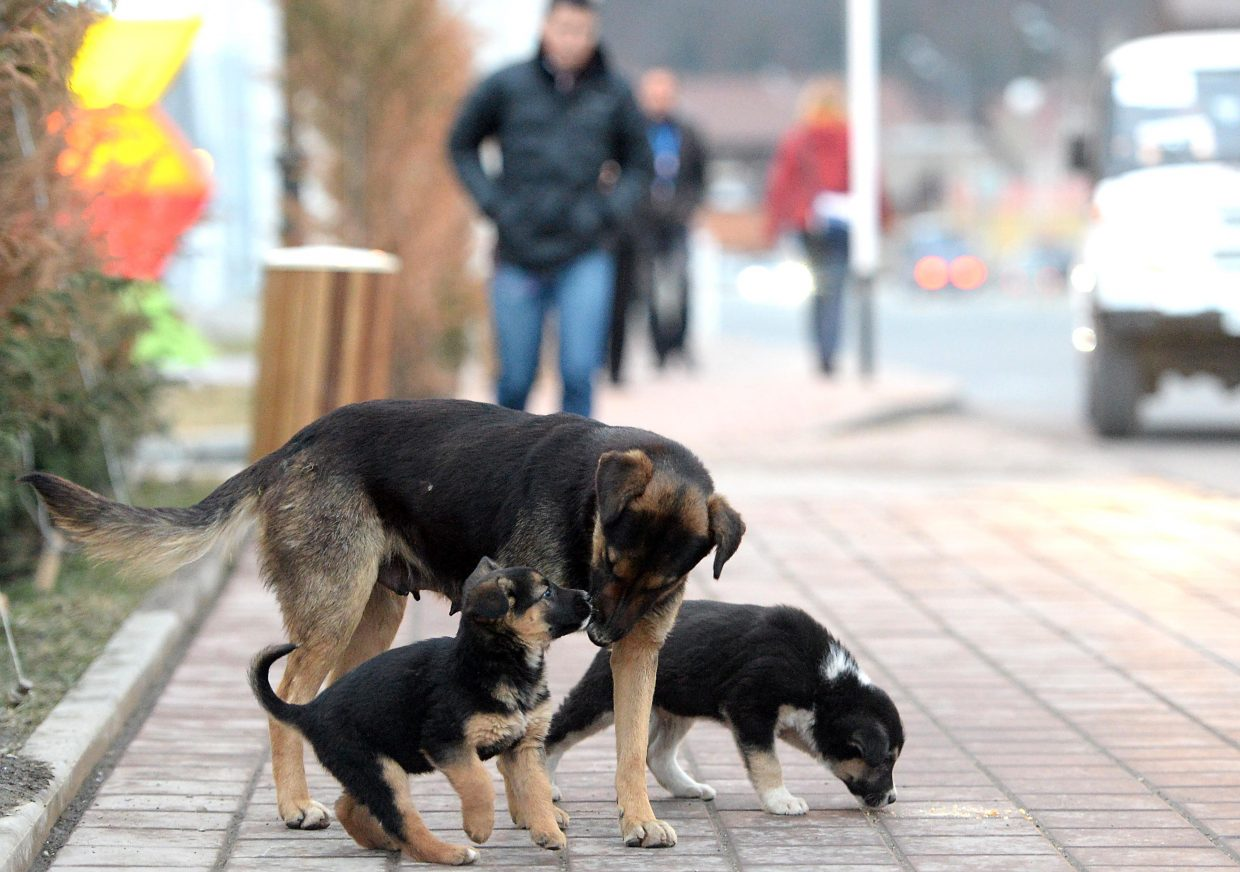Sochi's stray dogs have been a talking point early in the Olympics, but these pups, and their mother, were getting plenty of love in the heart of Krasnaya Polyana, Russia, home of the mountain cluster of venues. They didn't have a home, but did have bowls of water and dog food, plus lots of attention from those passing by.