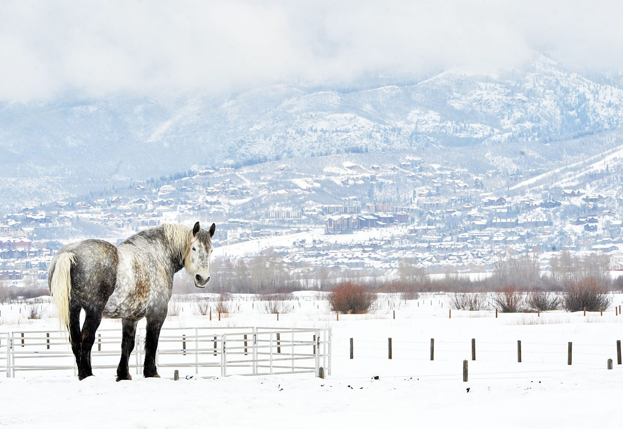 Not even Monday morning's dreary winter weather could dampen the striking beauty of this horse, which could be seen off of Routt County Road 14 near Steamboat Springs.