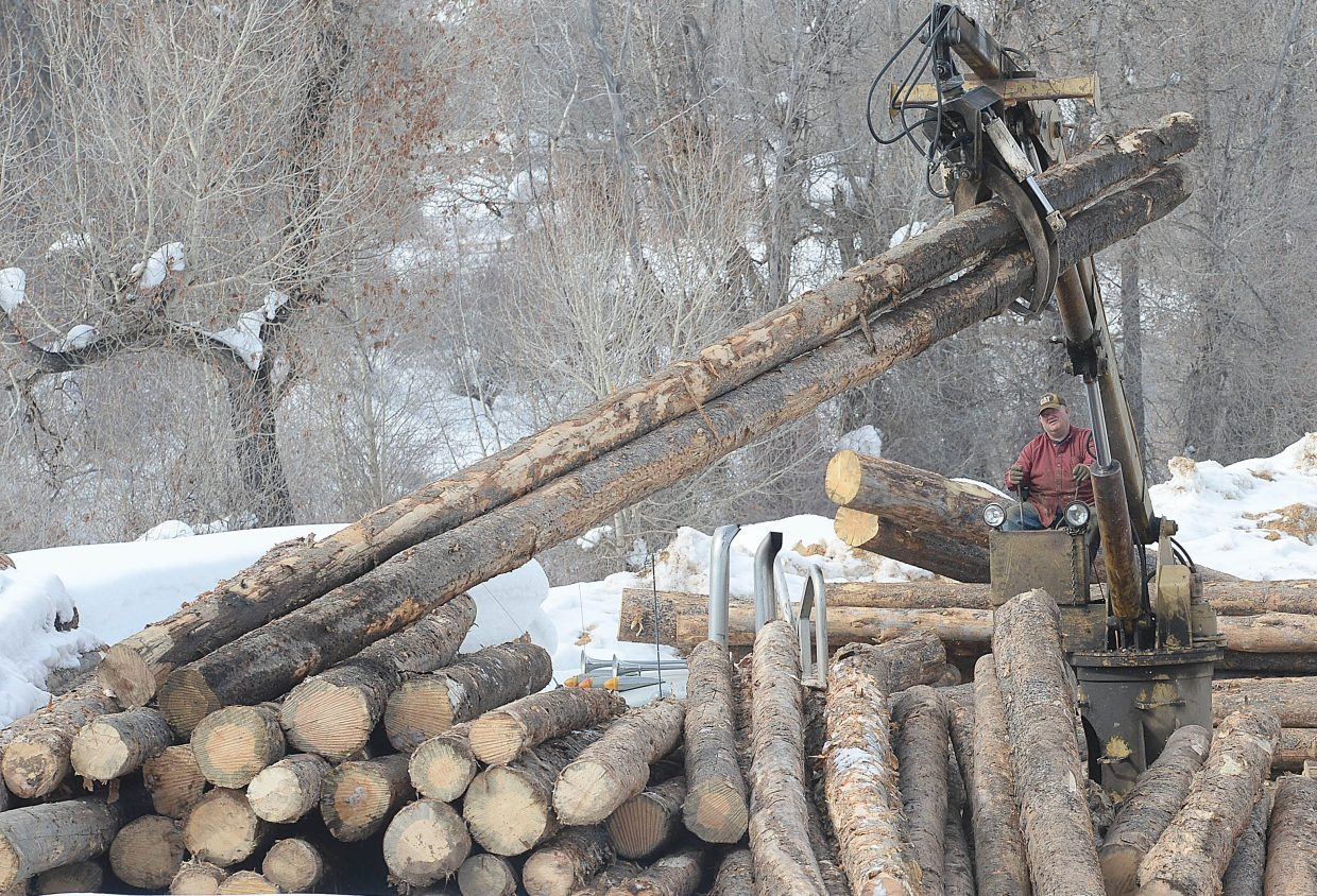 Gerald Cox unloads a truck load of trees at J Bonn Wood Products in Steamboat Springs Wednesday afternoon. The trees will be milled into lumber by the local company for use in the construction of homes.