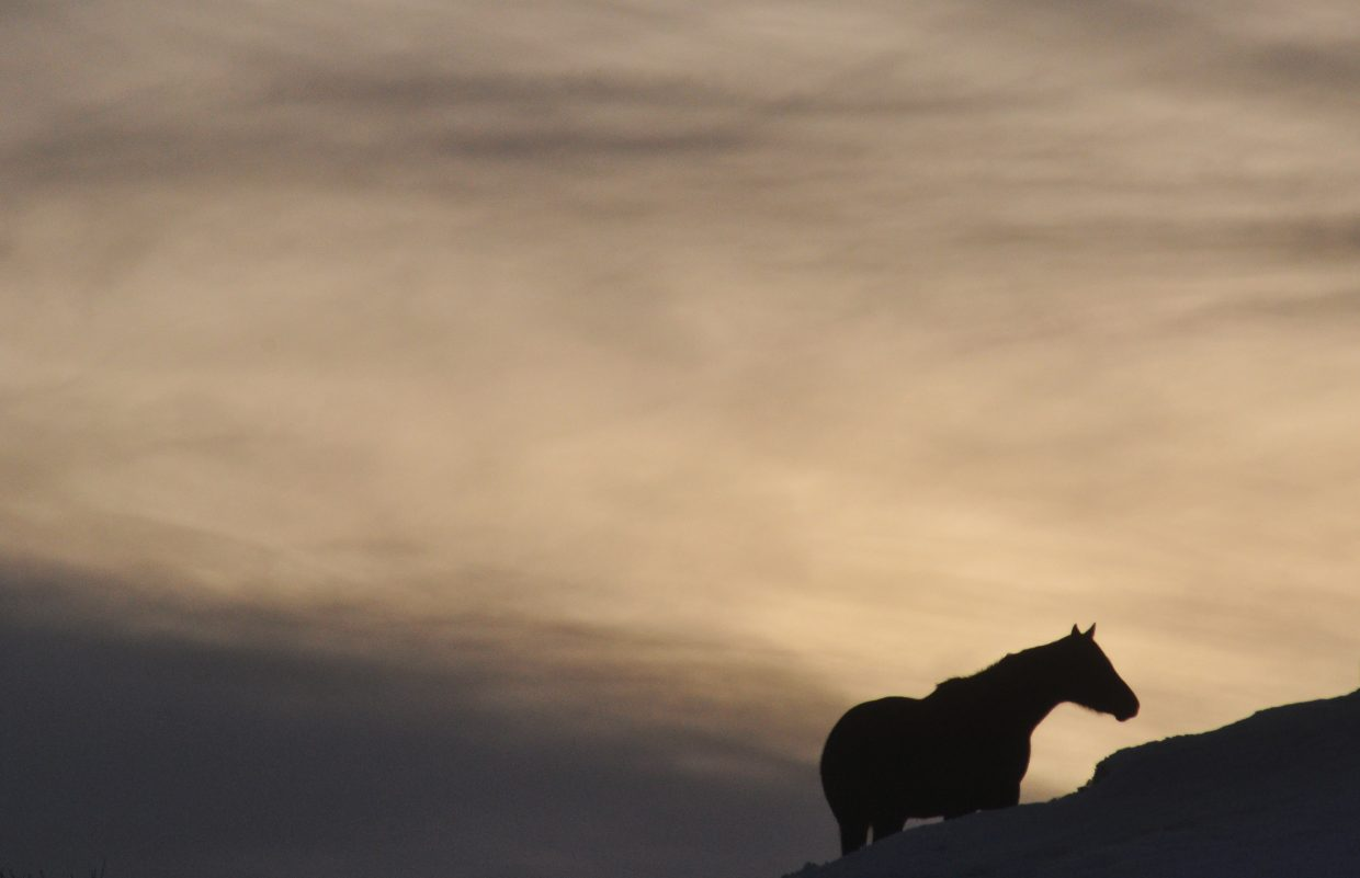 A horse feeds at sunset on a snowy hill west of Steamboat Springs. Snow returns to the forecast Wednesday and is expected to linger though out the week.