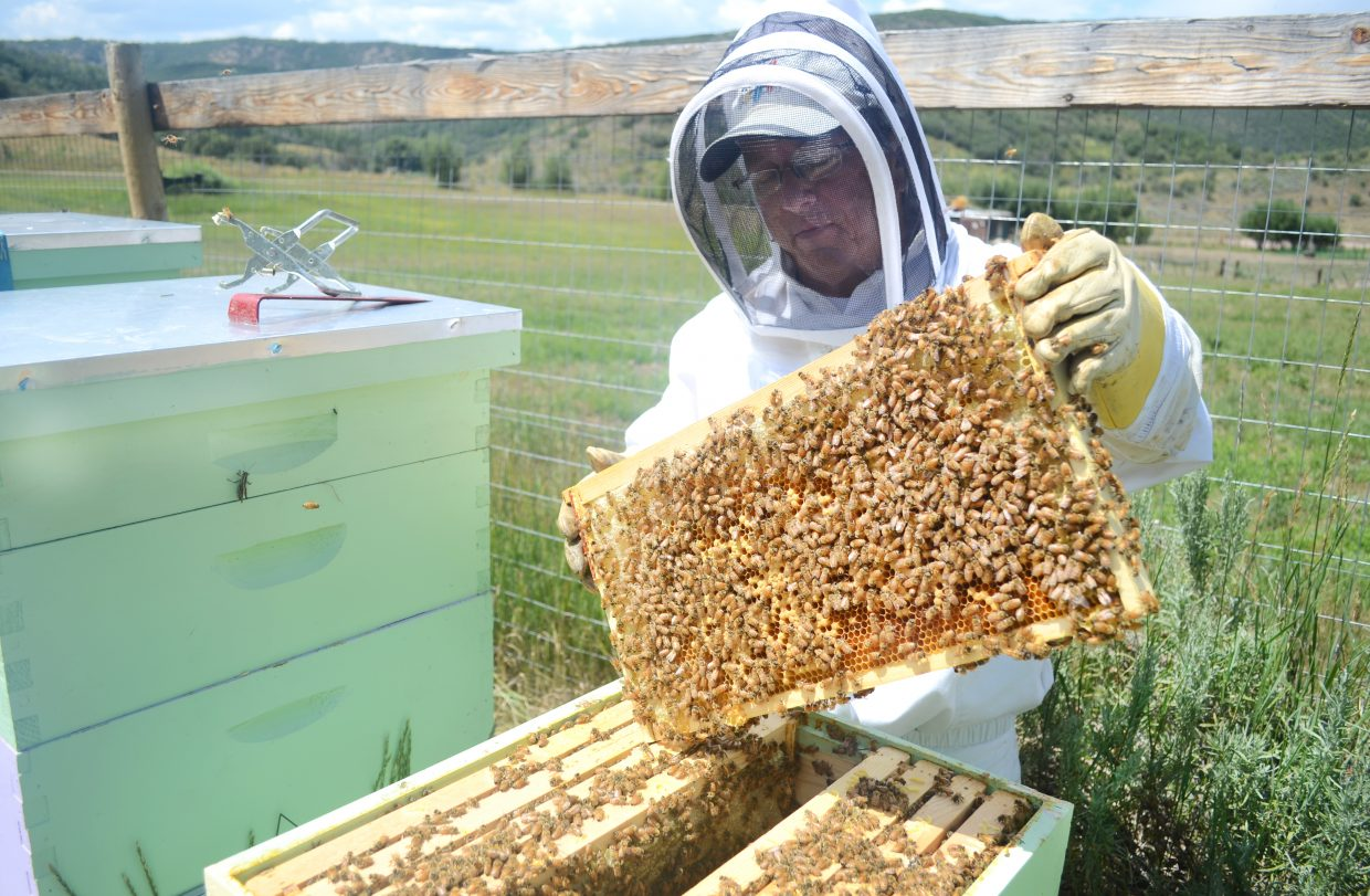 Beekeeper David Truly checks on a hive at his farm outside Oak Creek.