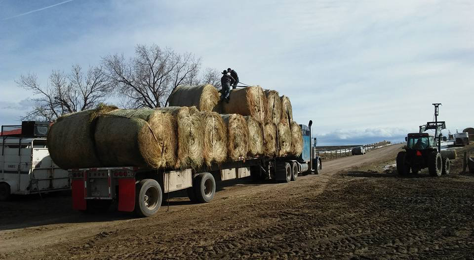 Hay is loaded on Donnie Hayes semi-truck. The donated hay included about 15 bales valued at $1,500.
