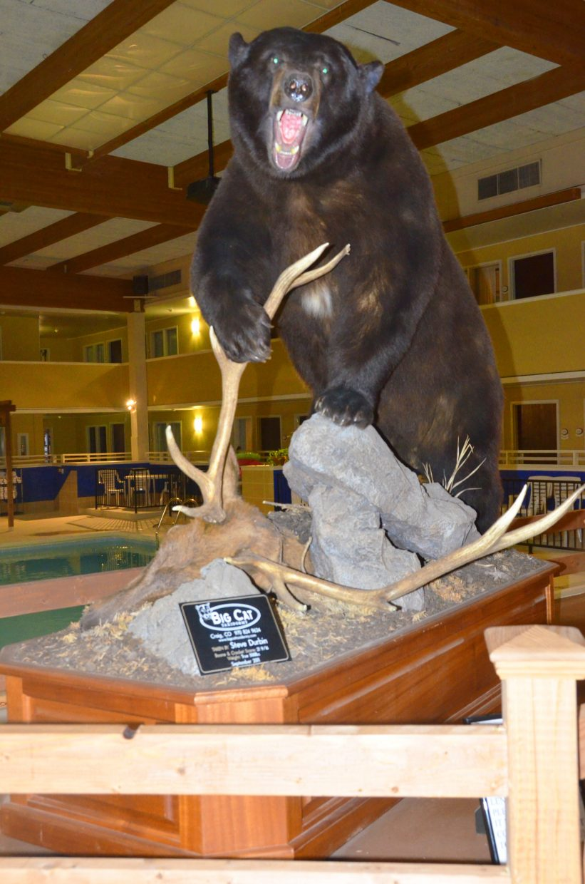 A stuffed bear from Big Cat Taxidermy roars a greeting for those in attendance at the Safari Club International Yampa Valley Chapter fundraiser banquet Saturday night at the Clarion Inn & Suites. A variety of game was on display throughout the venue.