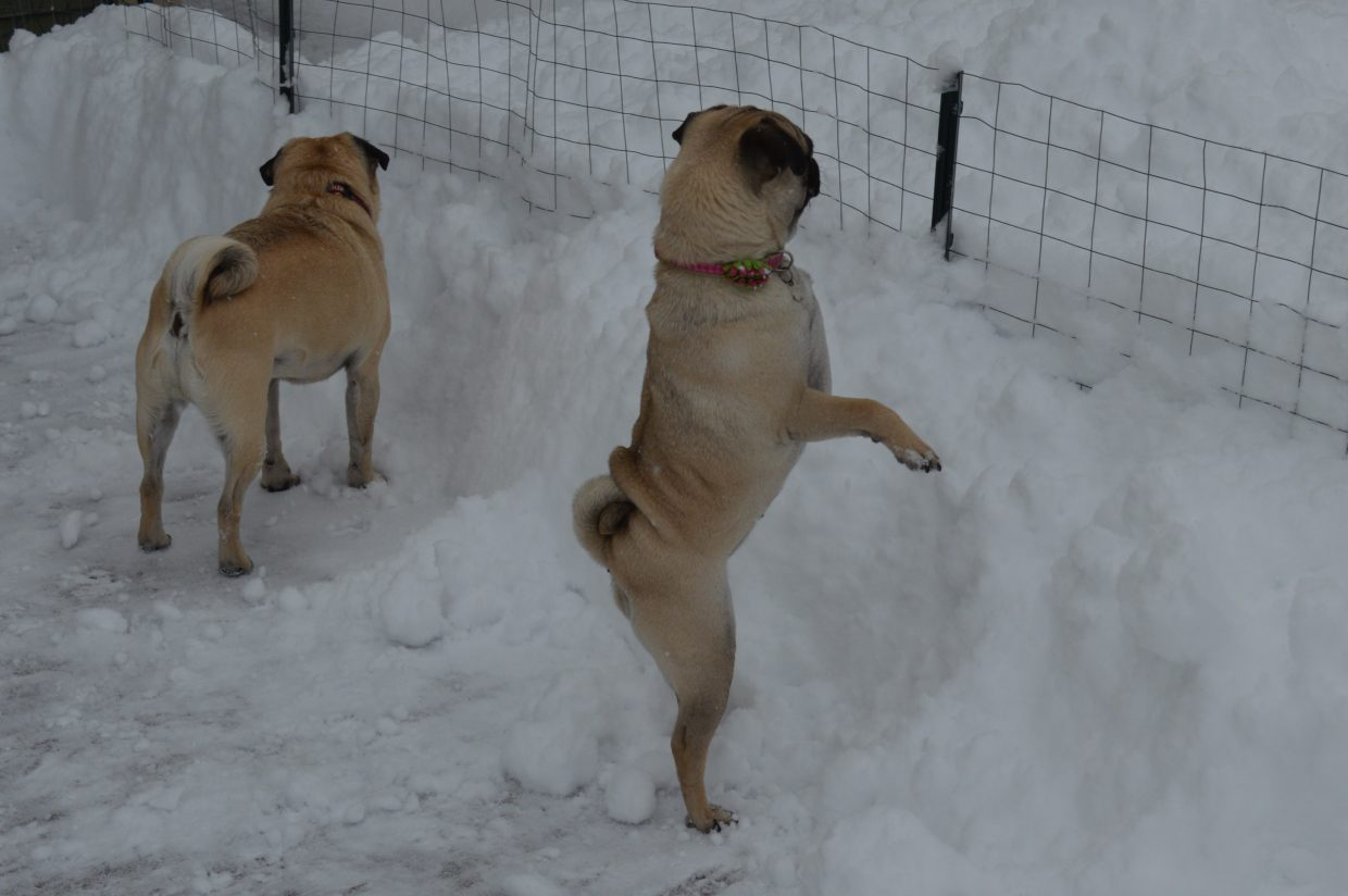 """""""Hey, could someone please lower the snow 'cause I can't see over the top."""" Submitted by: Krissy Small"""