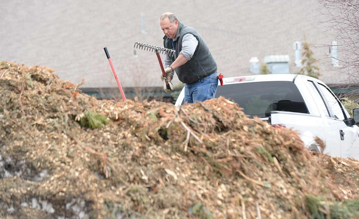 Sean Derning uses a rake to load mulch into the back of his pickup truck near the Howelsen Hill Ice Arena. Derning plans to use the mulch for landscaping and gardens around his house. The mulch is what remains of Christmas trees that were dropped off after the holidays.