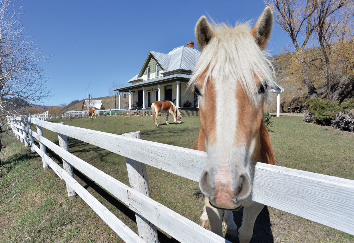 Horses graze in the front yard of a home just off of U.S. Highway 40 west of Steamboat Springs Monday morning.
