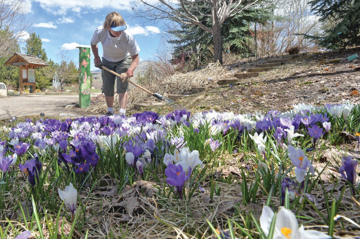 Gayle Lehman, supervisor at the Yampa River Botanic Park, rakes the edge of one of the many flowerbeds inside the park, which opened Tuesday. She said she has been working to get the park open for visitors for several weeks. The park is now open from dawn to dusk, and Lehman said the park would remain open even if the weather later this week doesn't cooperate.