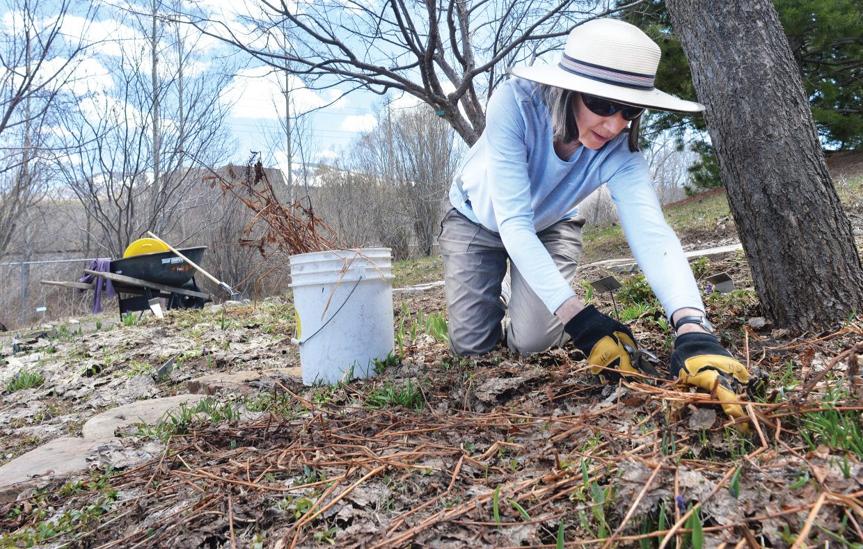 Yampa River Botanic Park employee Grace Holt cleans up one of the flowerbeds at the popular local park. The park opened for the season on Tuesday, and there are plenty of spring flowers blooming in the beds. However, the weather later this week is expected to feel more like winter than spring.