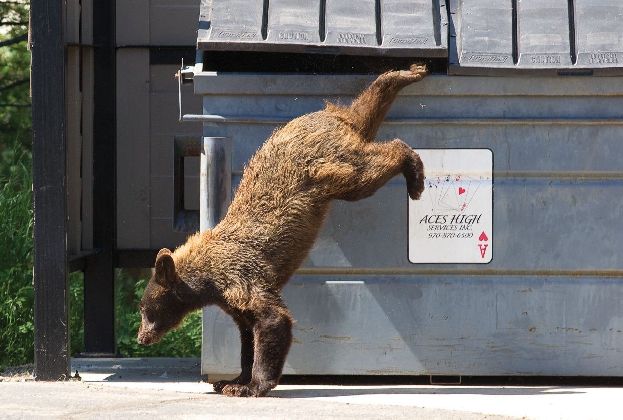 A black bear jumps out of a trash bin in 2011 at the Selbe Apartments on Rollingstone Drive. As bears become more active around town, wildlife officials are stressing the ways residents can help keep them out of trouble.