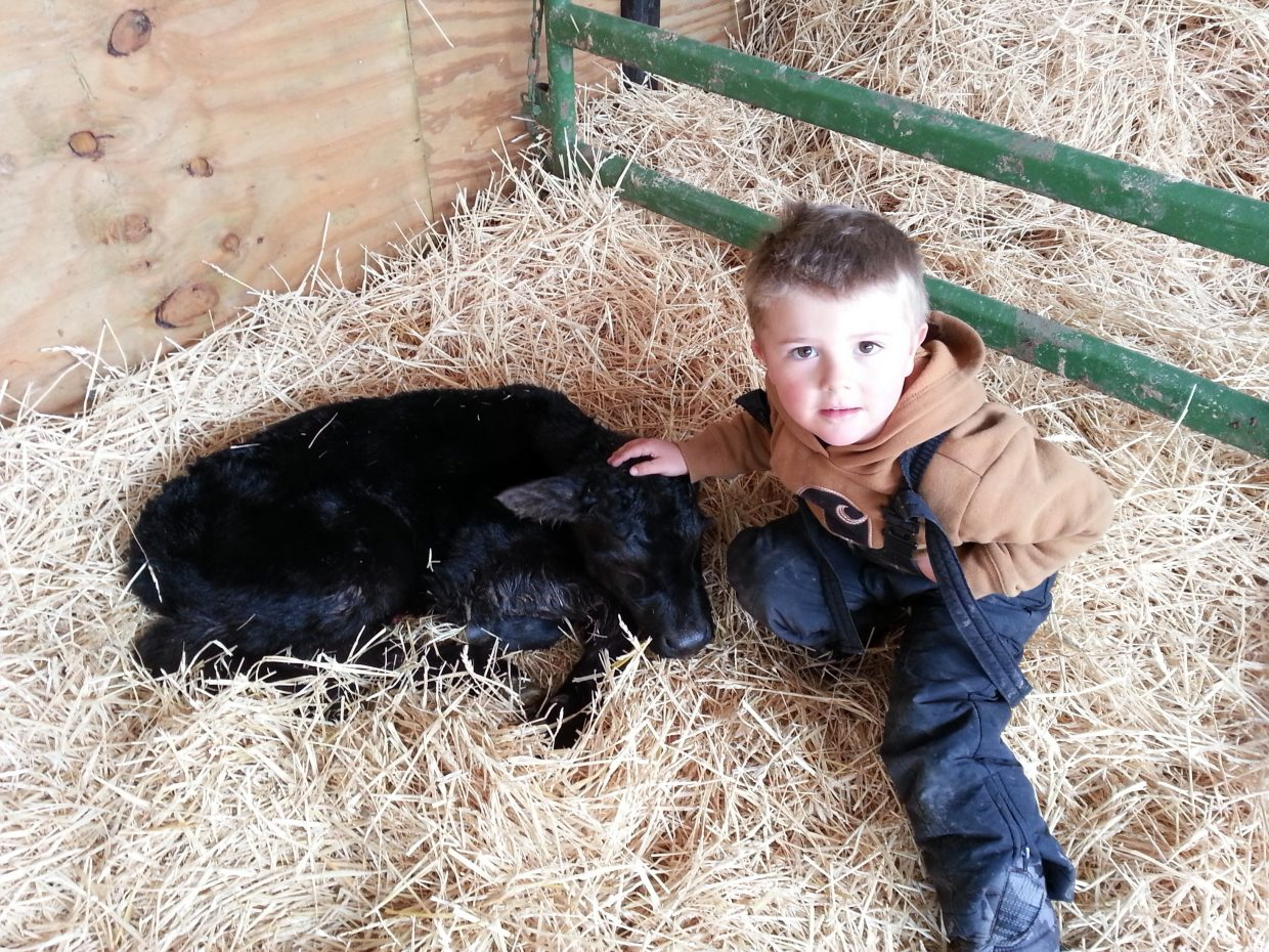 Eisten Gittleson with a calf at Gittleson Angus Ranch. Submitted by: Don