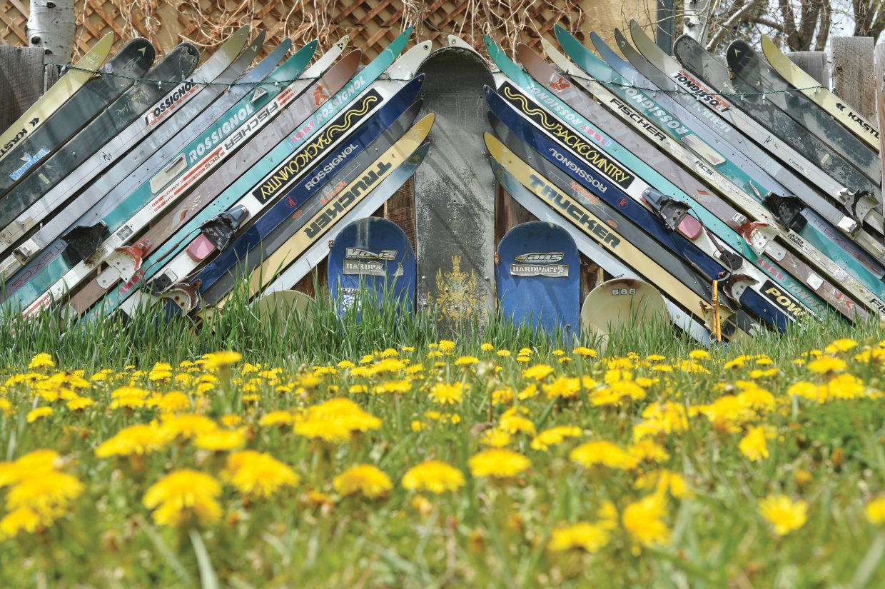 Old skis and dandelions blend together to create a scenic view in old town Steamboat Springs.