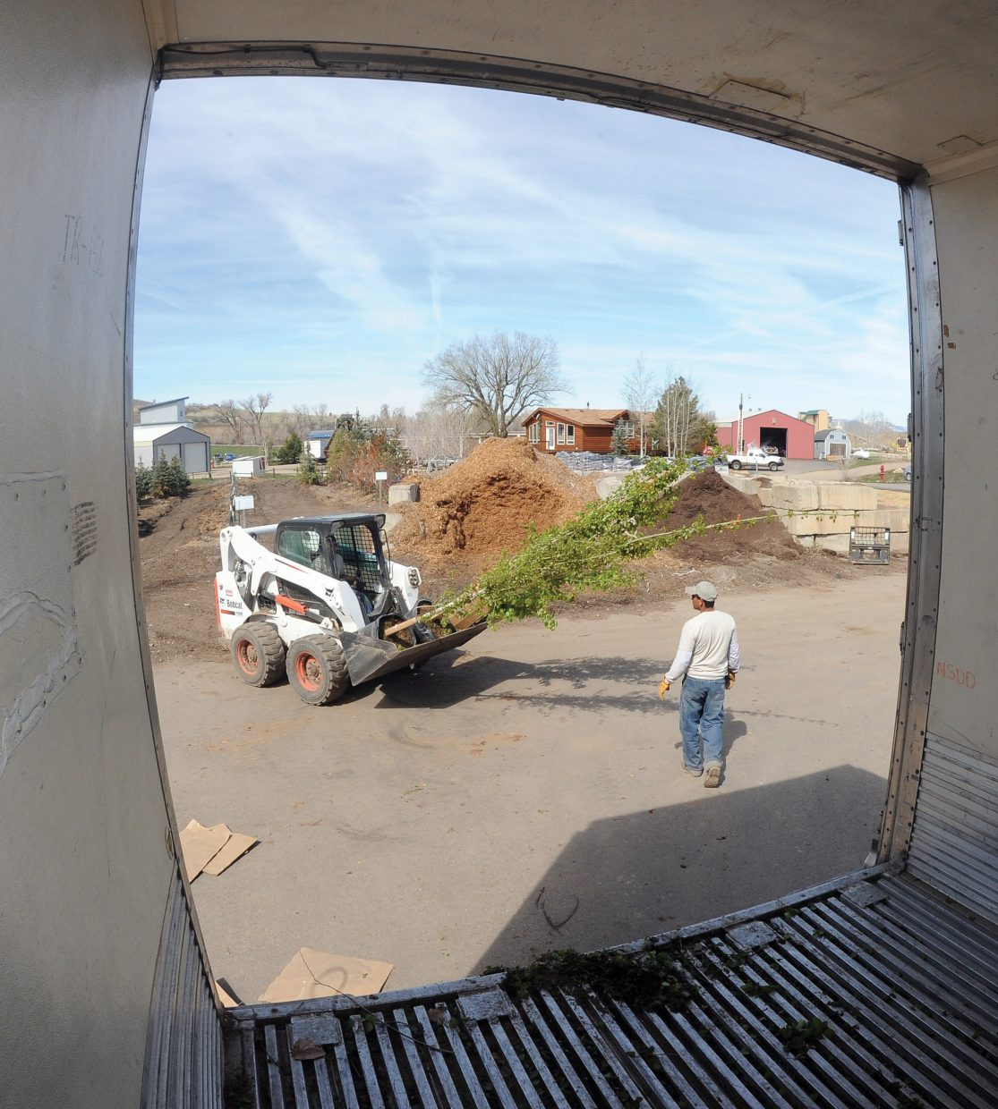 Employees use a Bobcat to unload a truck filled with aspen trees at the Windemere Landscape and Garden Center in Steamboat Springs.