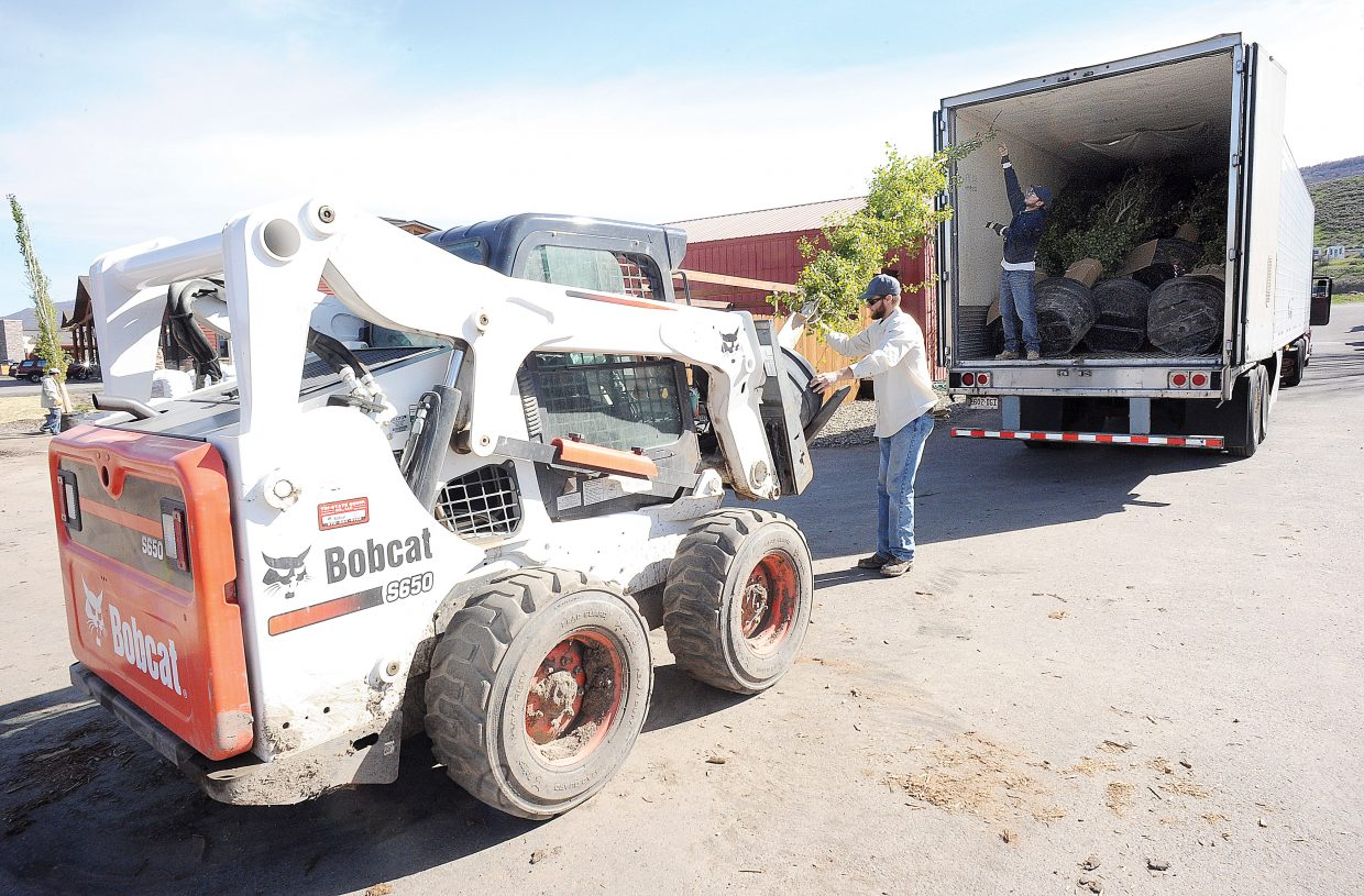 Employees Lee Morris and Juan Ocejo use a Bobcat to unload aspen trees from a semi at the Windemere Landscape and Garden Center.