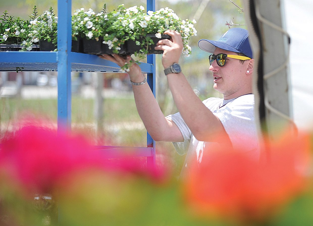 Employee Alex Chiara unloads cart of flowers at the Windemere Landscape and Garden Center in Steamboat Springs. Trucks have been rolling into the Steamboat Springs business since mid-April, and deliveries will continue to ramp up through June.