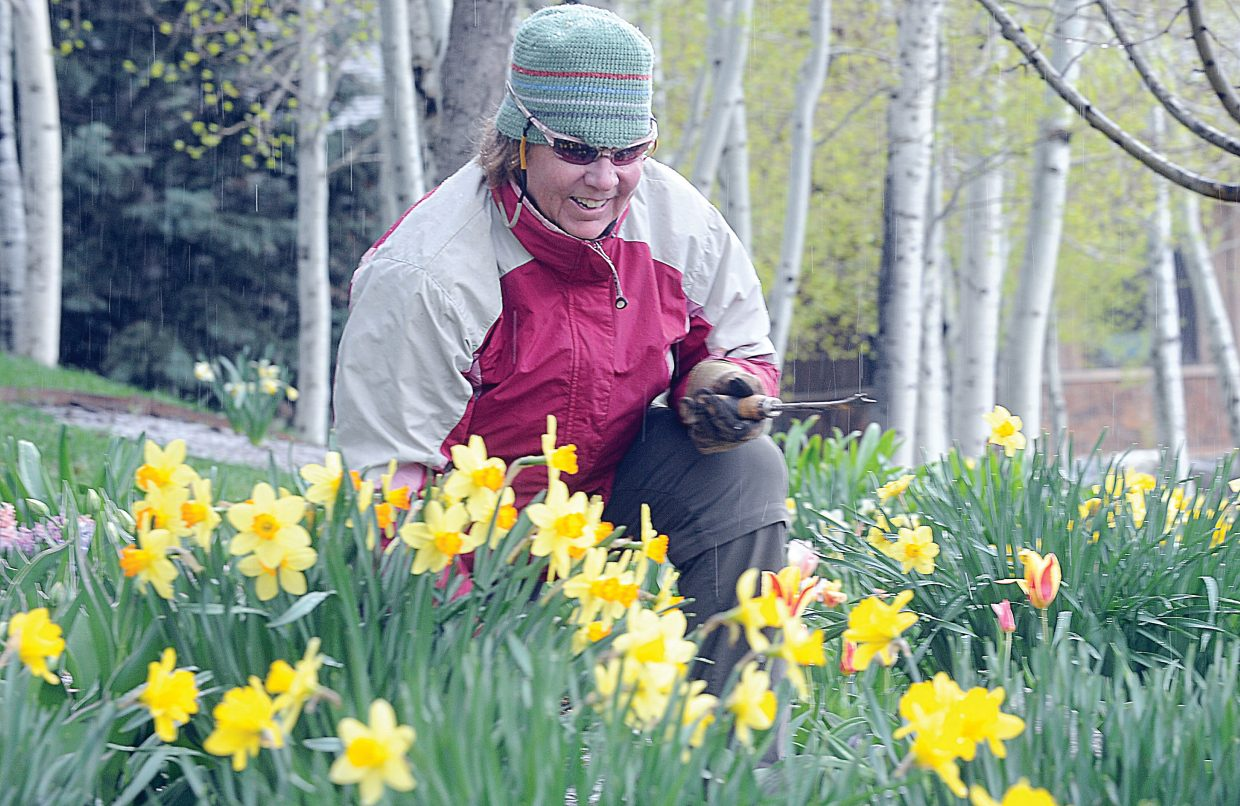 Gayle Lehman, the Yampa River Botanic Park supervisor, weeds a flowerbed full of daffodils Thursday afternoon. Flowers, plants and home improvement will take center stage this weekend during the Steamboat Home & Garden Expo from 10 a.m. to 2 p.m. Saturday at the Depot Art Center.