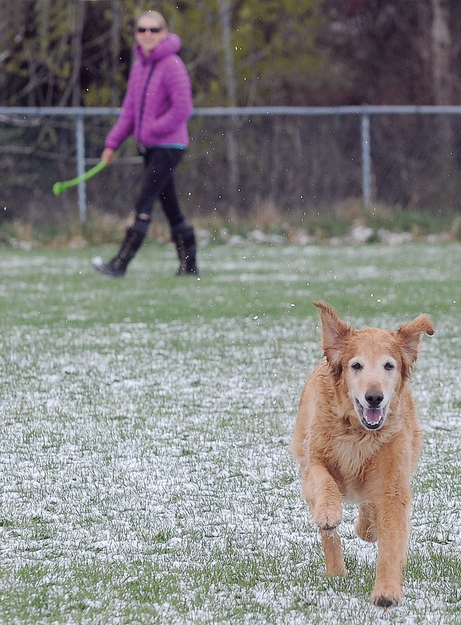 The trace of snow that covered the ground at Memorial Park on Thursday morning didn't seem to bother golden Retriever Kylie while she was chasing balls with owner Nicoline Worley, who can be seen in the background.
