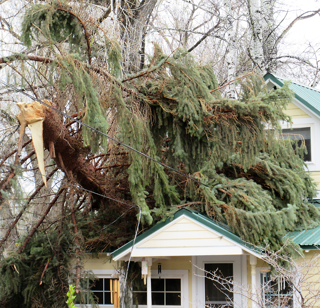 Hayden residents Matt and Lauren Kuckkahn returned to their home on East Jefferson Street at about 5 p.m. May 6 to find that a sudden wind gust had dropped half of a mature evergreen tree on their front entrance. No one was hurt, and nothing in the home was broken.