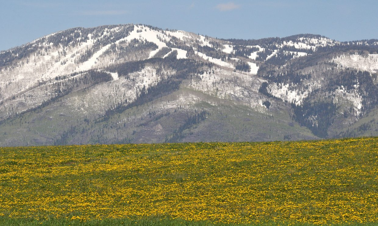 While snow still lingers on top of Mount Werner, there are colorful signs of spring popping up in the fields south of Steamboat Springs.