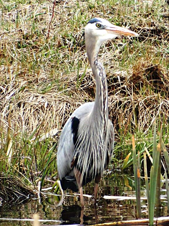 Annette Zuber, of Craig, snapped this beautiful picture of a blue heron.