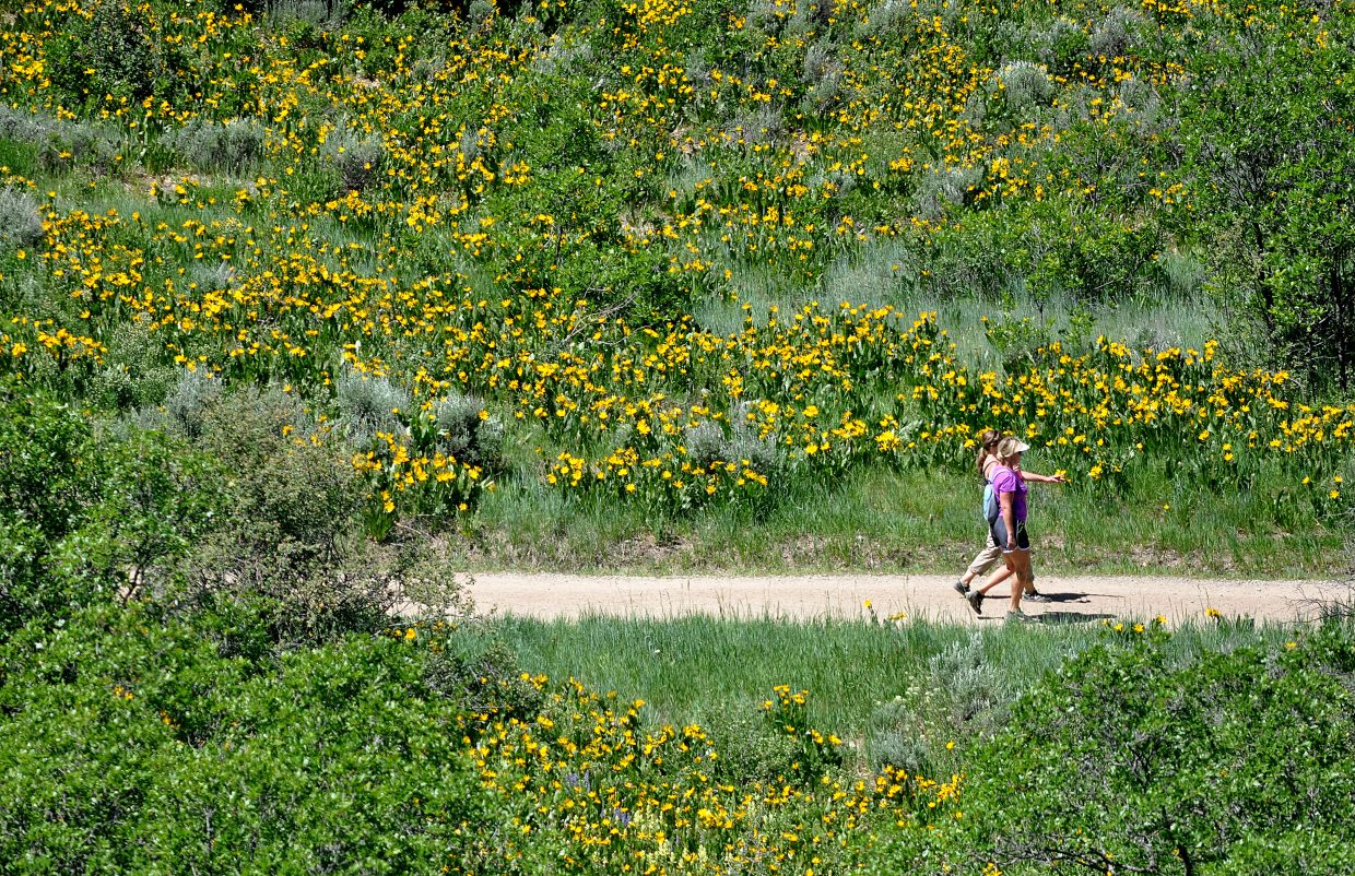 Hikers enjoy a summer day on Emerald Mountain in June 2013. Steamboat Springs ranked high in a fitness challenge last month in which participants strived to log at least 30 minutes of physical activity each day.