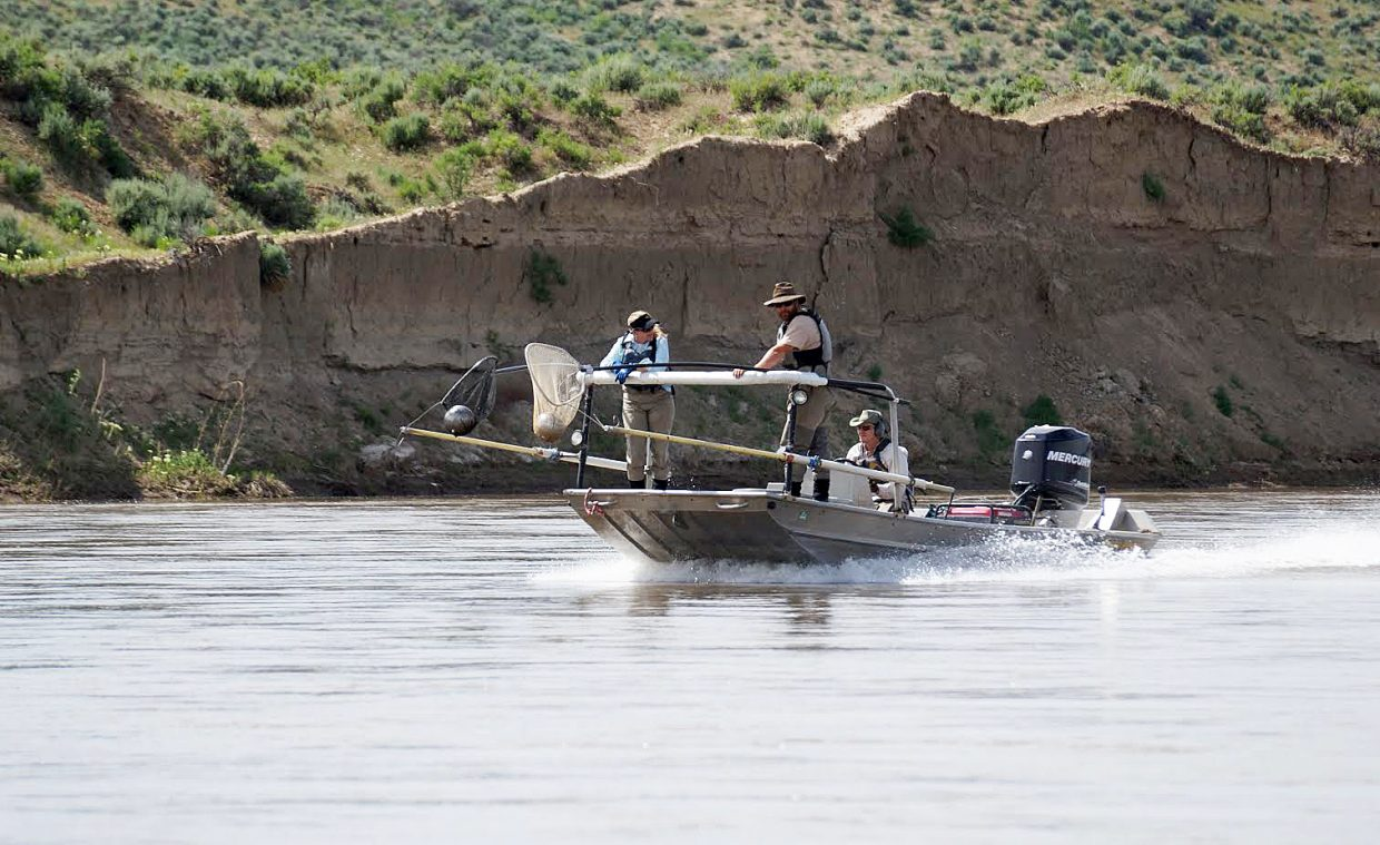 A shock boat cruises down the Yampa.