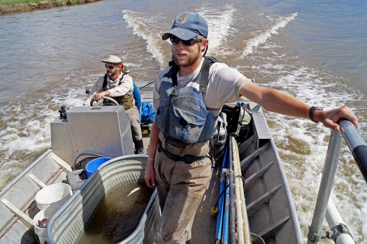 Colorado Parks and Wildlife fishery technician Nathan Thompson, foreground, and aquatic biologist Cory Noble.