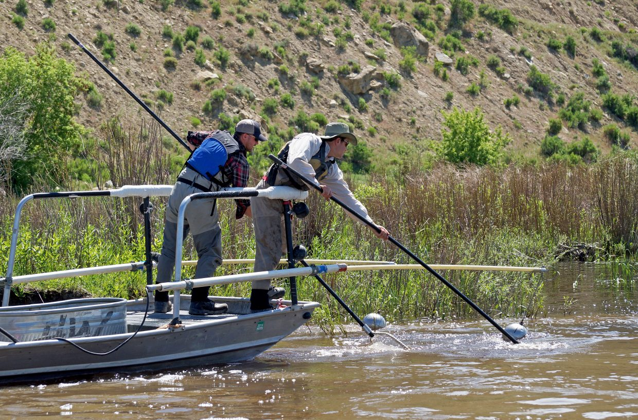 Colorado Parks and Wildlife fishery technicians Trey Pressler and Drew Reynolds man the nets on the shock boat.