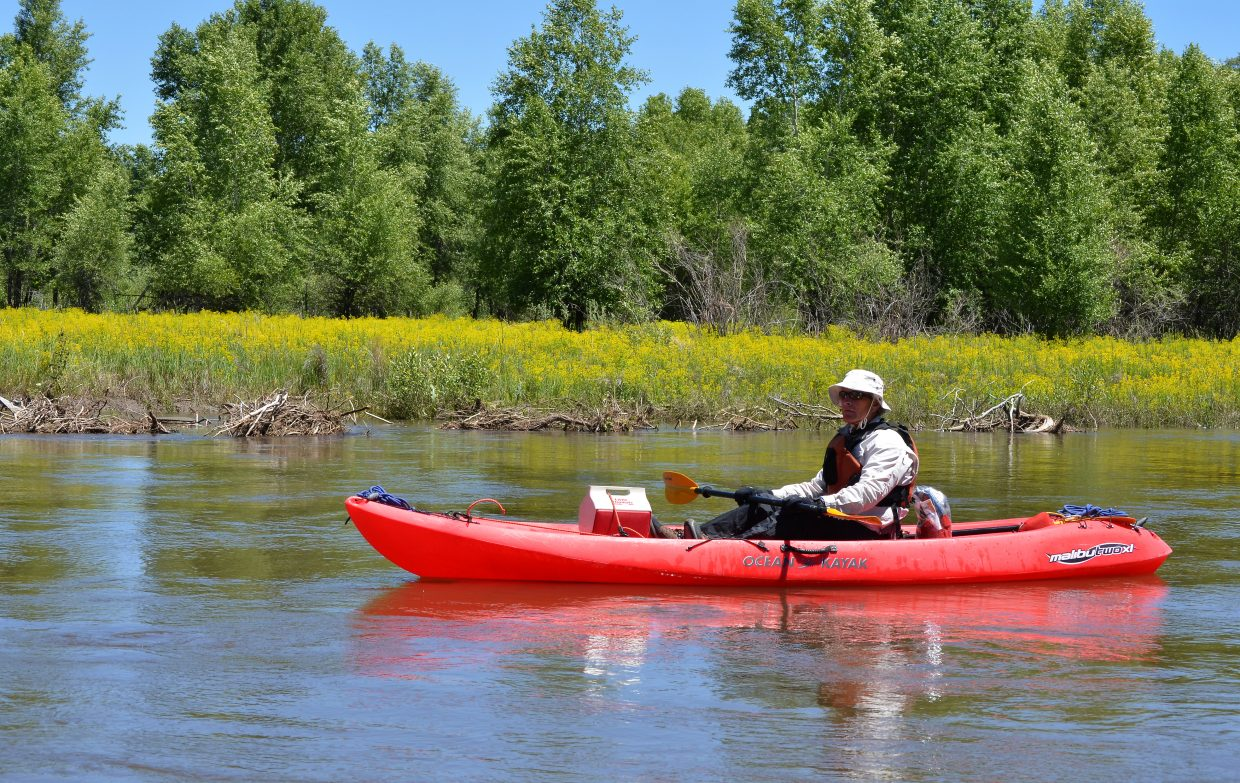 Jay Gallagher, who represents the Yampa and White rivers on the Colorado Water Conservation Board, paddles June 16 past a stretch of river bottom on the Yampa between Hayden and Craig where the yellow blossoms of the invasive plant, leafy spurge, are dominating native plants. It's early in the season, but there were many areas in the same stretch of river where the spurge was not so evident.
