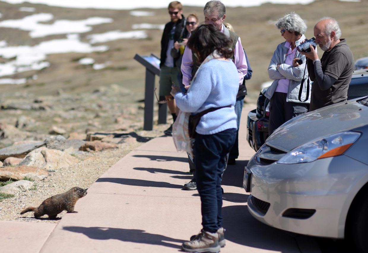 Looking for wildlife at Rocky Mountain National Park? Look for a crowd.