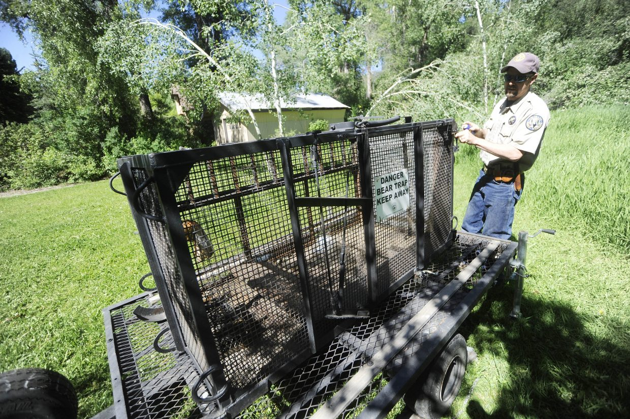 Colorado Parks and Wildlife District Wildlife Manager Steve Baumgartner sets up a bear trap Thursday in a yard off Yahmonite Street in downtown Steamboat Springs.