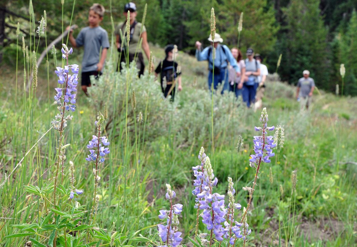 Hikers walk by a cluster of wildflowers at Steamboat Lake State Park. Although some of the most popular hiking trails in Routt County remain muddy and snowpacked after a long winter, there are many early season hikes now open all across the county.