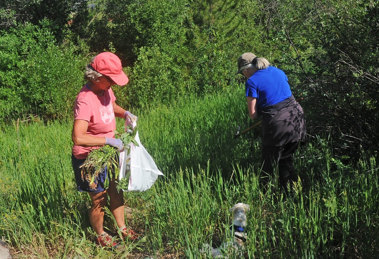 Linda Lewis, left, and Peggy Weaver remove weeds from a section of the Lower Spring Creek Trail on Tuesday morning. The women are removing weeds by hand so that the city of Steamboat Springs does not have to spray chemicals to remove them.