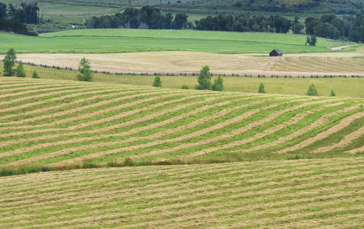 Rows of freshly cut hay wait to be baled west of Steamboat Springs along Routt County Road 42 Wednesday morning.