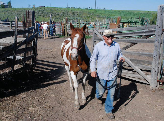 Jim Stanko leads a colt out of a corral on his family's centennial ranch on Routt County Road 33 on branding day 2006.