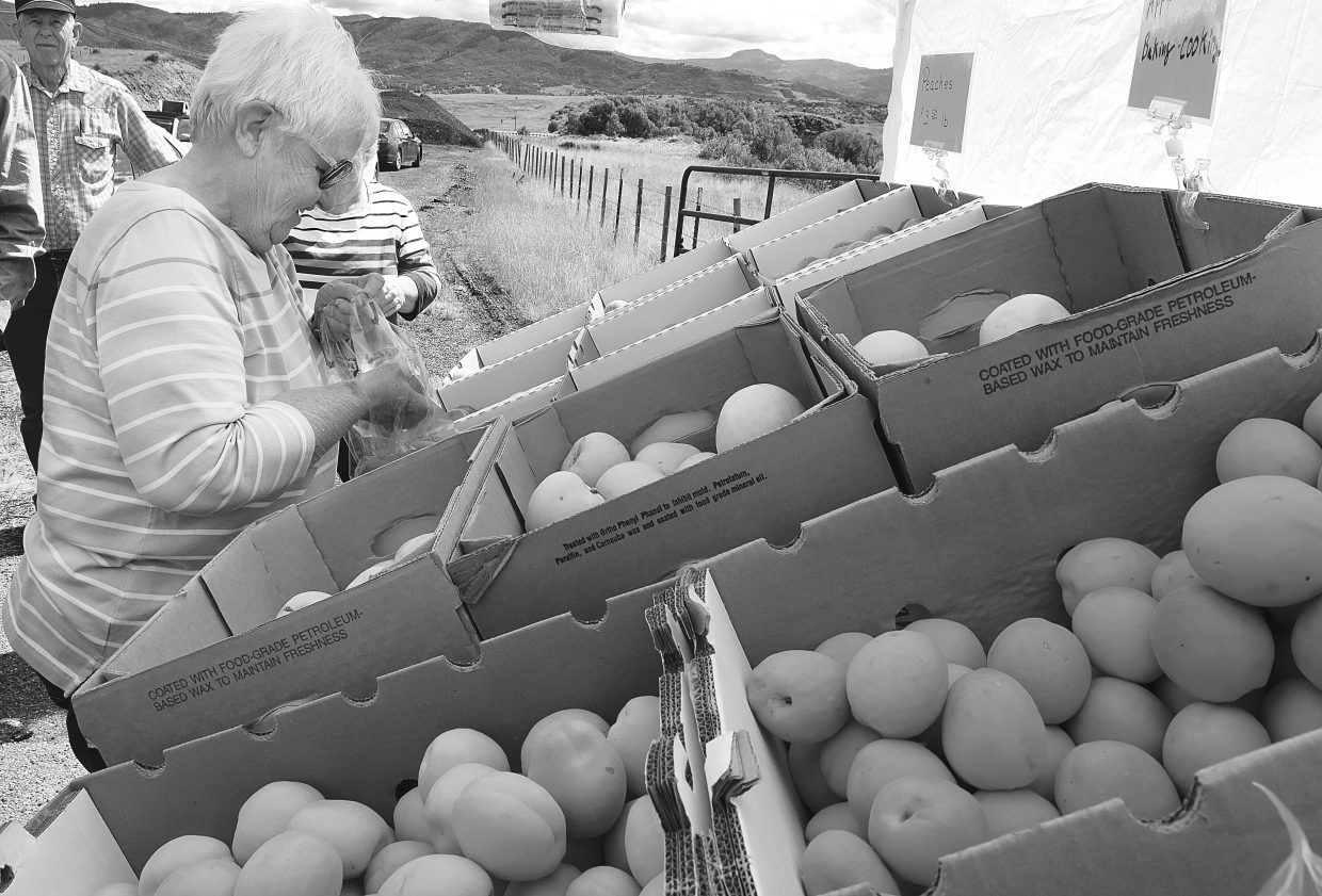 Milly Judson picks out some fruit at Nana's Fruit and Jam Stand, which was set up just west of Steamboat Springs Friday morning along U.S. Highway 40. The stand sets up on a pull out Fridays and normally takes part in the farmer's market Saturday in Steamboat Springs.
