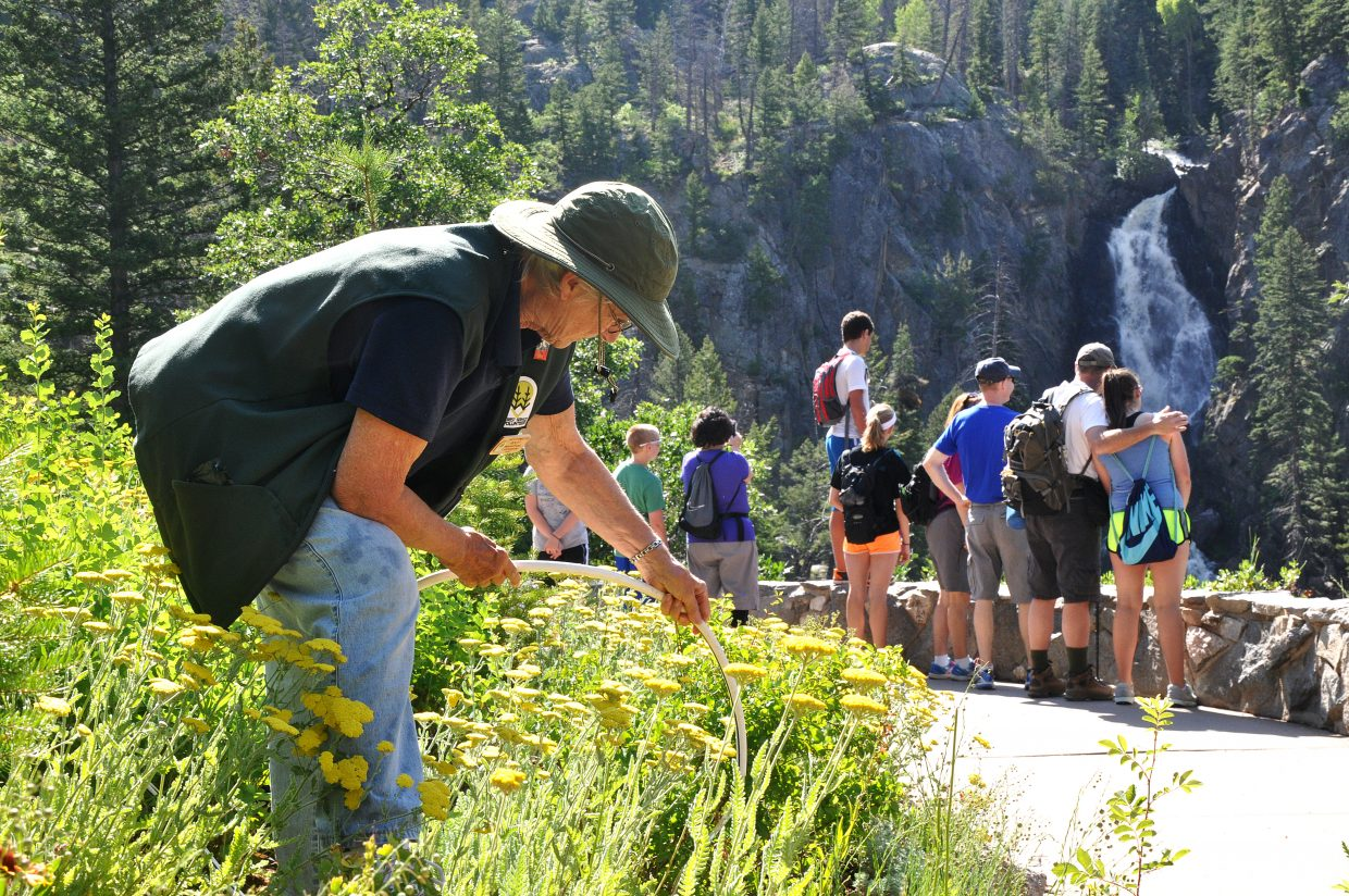 Nina Lowe waters the flowers at the Fish Creek Falls overlook area on Wednesday morning as a large crowd admires the waterfall. Lowe, a U.S. Forest Service volunteer, lives in a camper at the start of the trail to the falls and helps take care of the grounds.