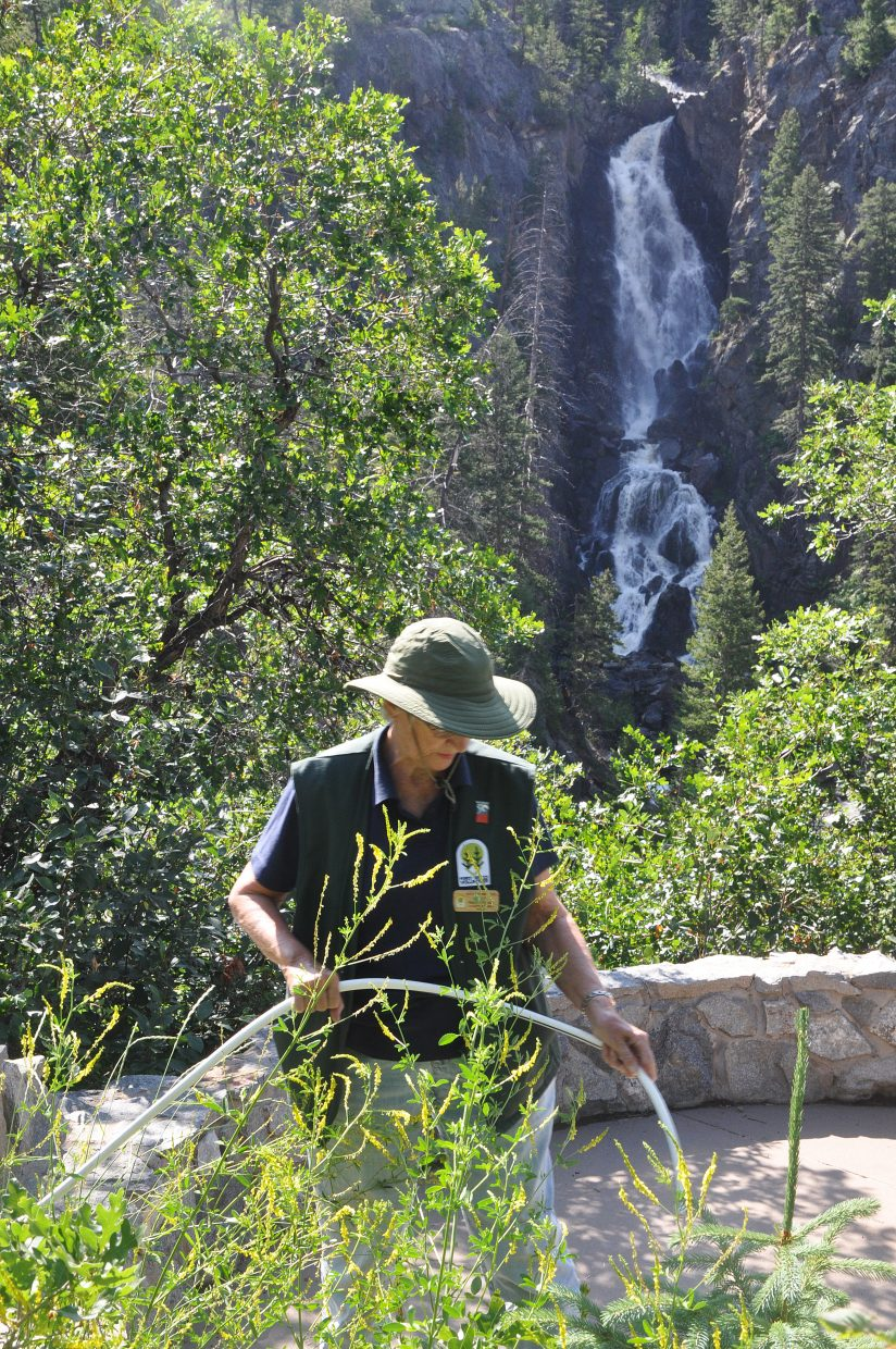 Nina Lowe waters plants at the overlook as Fish Creek Falls roars in the background. Lowe said the waterfall is one of the most unique places to volunteer at.